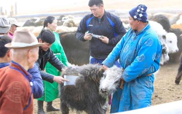 People standing around and petting a yak.