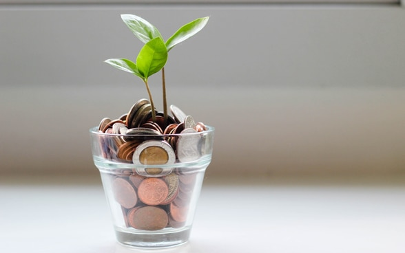 A plant sprouts from coins.