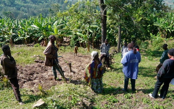 Farmers gathered and discussing in a banana plantation