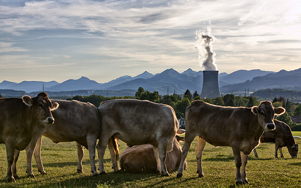 View of the Gösgen nuclear power station taken from a meadow with cows, showing the Alps in the background