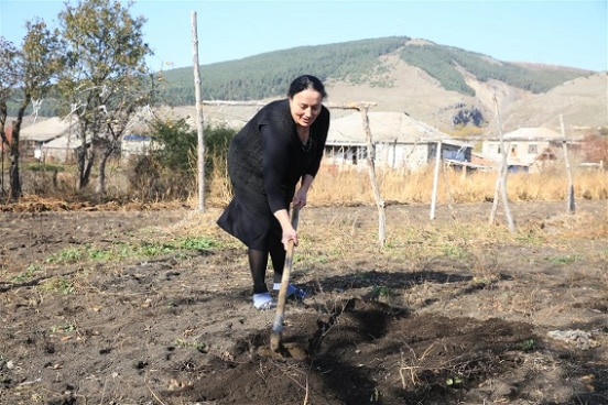 Aishi is ploughing soil