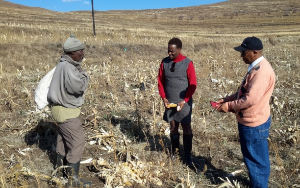 Altext: Two experts and a local farmer in a drought-ravaged cornfield.