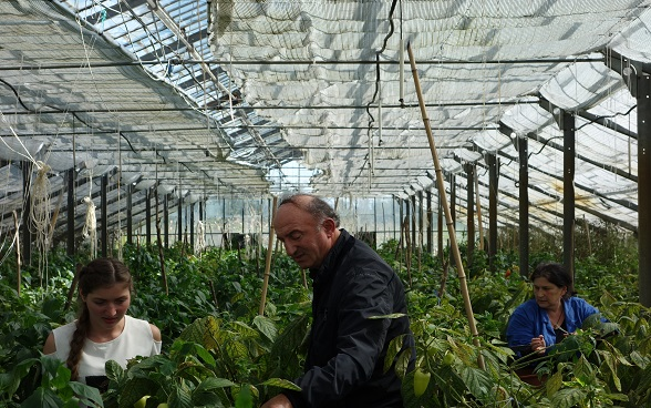 Three people in a greenhouse.